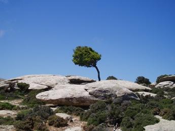 Baum in den Felsen