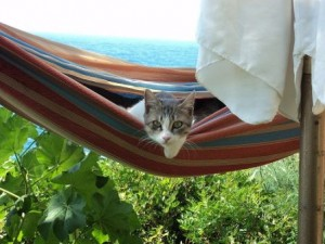 Katze in Hngematte, Foto Karin Goldenbow