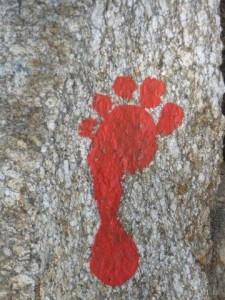 Roter Fuss, Foto Peter Rütten