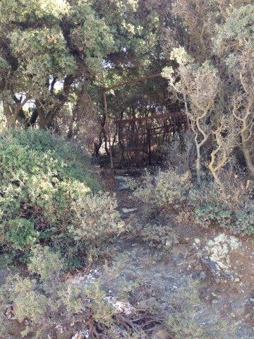 Akropolis - Das Tor im Dickicht