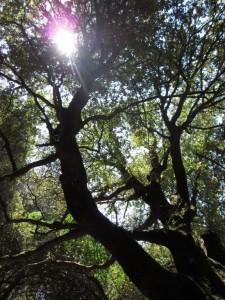 Lichtspiel im Zauberwald