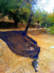 mandelernte-mit-bambusstangen