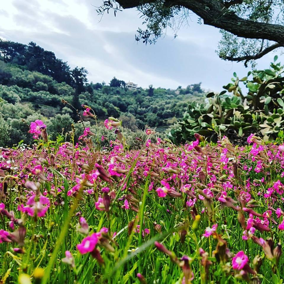 Frühling in Ikaria